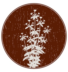 Abstract composition with oregano flowers vector