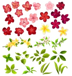 Collection of different flowers and leaves vector