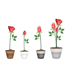 Set of red roses in ceramic flower pots vector