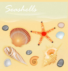 Seashells vector