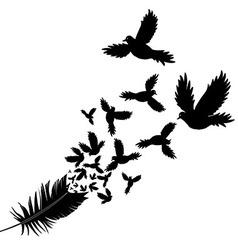 Feather of bird vector