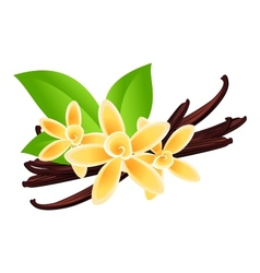 Vanilla flowers vector