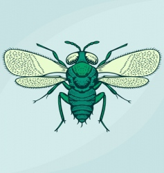 Flying insect vector