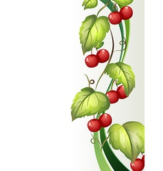 A vine plant with fruits vector