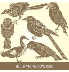 Variety of vintage bird vector
