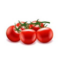 Tomatoes branch isolated on white vector