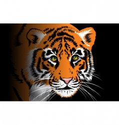 Tiger on black background vector
