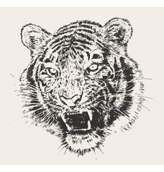 Tiger head engraving hand drawn sketch vector
