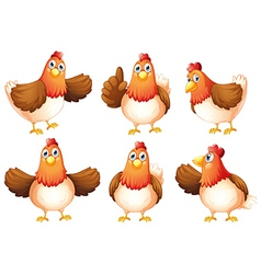 Six fat chickens vector