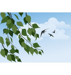Birch branches and swallows vector