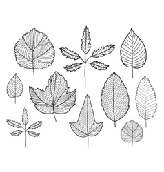 Set of hand drawn doodle line leaves vector