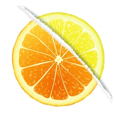 Lemon-oranges design vector