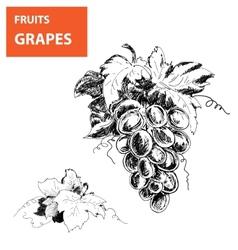Hand drawn of grapes vector