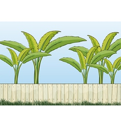 Banana plants and a fence vector