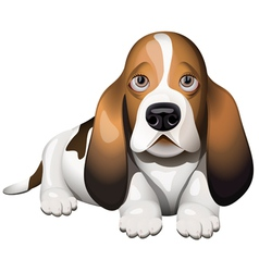 Basset hound vector