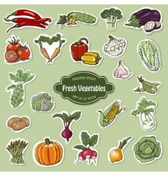 Collection of icons vegetables vector