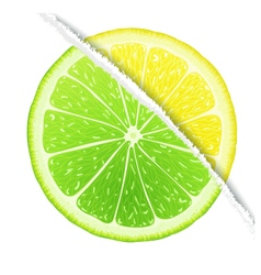 Lemon-lime design vector