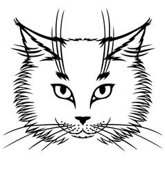 Cat white vector