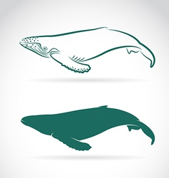 Image of whale vector