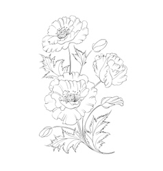 Poppies flower vector