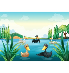 A group of aquatic birds at the pond vector