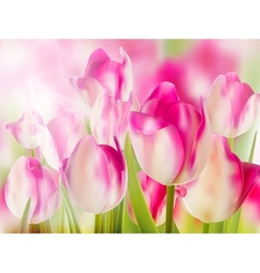 Pink tulip with bokeh eps 10 vector