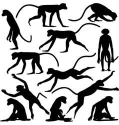 Monkey poses vector