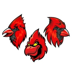 Cardinal bird heads set vector