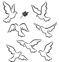 Flight of dove vector