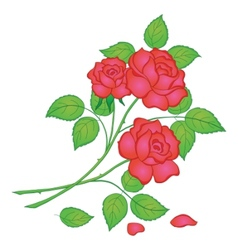 Flowers red rose vector