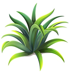 A dwarf agave plant vector