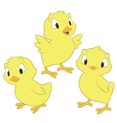 Cartoon chickens vector