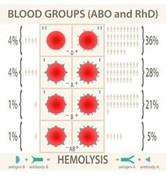 The abo and rhd blood groups infographic vector