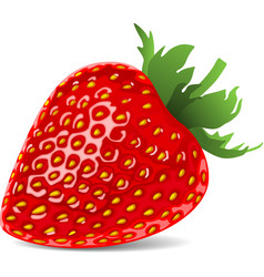 Strawberry red cartoon nature vector