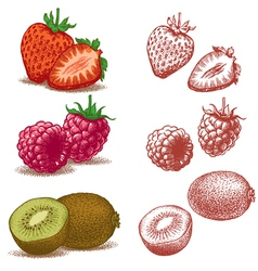 Strawberry raspberry and kiwi vector