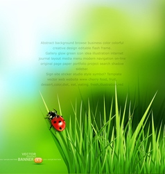 Green grass and ladybug vector