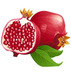 Ripe pomegranates with leaves isolated on a white vector