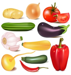 Set vegetable with joint by turnip eggplant vector