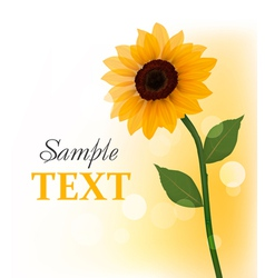 Beautiful sunflower vector