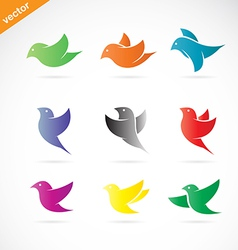 Group of colorful bird vector