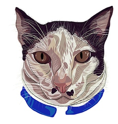 Hand drawn kitty face 2 dots vector