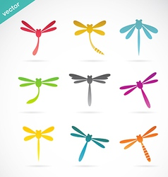 Group of colorful dragonfly vector
