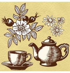 Chamomile tea and rosehip vector