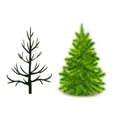 Trees trunk and branched green christmas tree vector