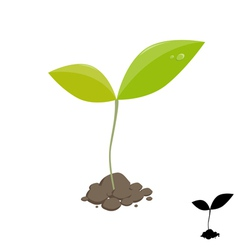 Little plant sprout vector