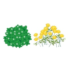 Jasmine plants and cosmos flowers vector