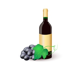 Wine bottle with black grapes vector