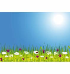 Spring meadow with flowers vector