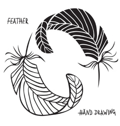 Hand drawn silhouettes of feathers in black and vector