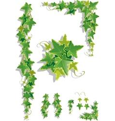 Ivy decorations vector